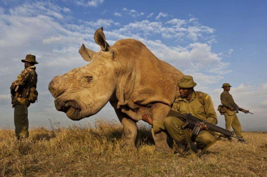 white rhino badass guards